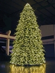 Giant Indoor outdoor paramount tree