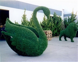 6' Topiary Swan with LED lights