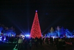 Canadian 65' Light Show Tree in Windsor