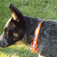 Biothane Reflective or Camo Dog Collars for Sale!