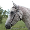 Western Bridle / Racing Bridle for Sale!