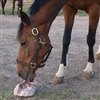 Remond Rock Salt for Horses for Sale!