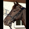 Difference Collection Double bridle