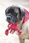 HUGGLEHOUNDS Knotties Woodland Lobsta Large