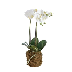 "23"" Poly and Plastic Drop-In Phalaenopsis by Napa"