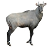 "Exotic Meat Market Offers, ""Nilgai Antelope Stew Meat for Pets. Nilgai Antelope Meat is more healthful and flavorful because it is truly grass-fed or brush fed meat. They're not eating grain out there in the wild."