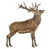 NEW ZEALAND RED DEER Shoulder Boneless BRN 6 Pieces -20 Lbs. Average Weight