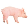 Head On Suckling Pig, Suckling Pig, Suckling Pig for sale, Buy Suckling Pig online, frozen Suckling Pig, fresh Suckling Pig,suckling pig recipe, whole suckling pig recipe, roast suckling pig recipe, cuban style suckling pig recipe, whole roasted suckling