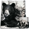 Black Bears Reversible 60 x 50 Fleece Blanket