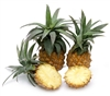 South African Baby Pineapples