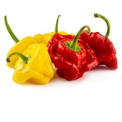 Scotch Bonnet Chile Peppers
