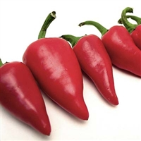 Red Fresno Peppers
