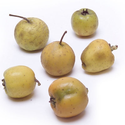 Tejocote Fruit