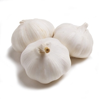 Colossal Garlic