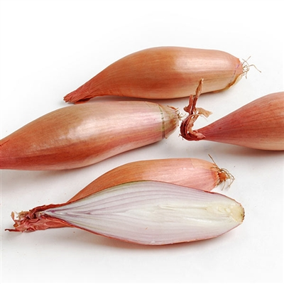 French Echalion Shallots