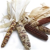 Indian Corn Ornamental