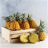 Baby Pineapple Crate