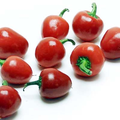 Cherry Bell Peppers