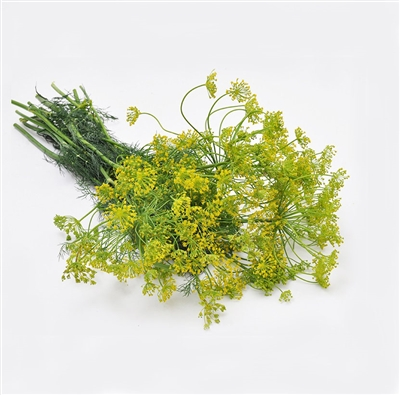 Crown Dill