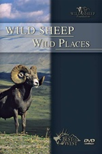 Wild Sheep Wild Places