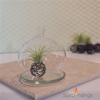 Glass Bubble Dome & plate Terrarium