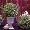 Frosted boxwood orbs