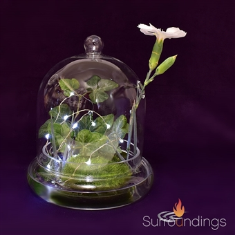 All Glass Dome Terrarium