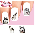 Husky Assorted Set of 20 Waterslide Nail Decals