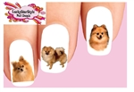 Pomeranian Assorted Set of 20 Waterslide Nail Decals