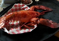1 x (3.75 to 4 LB) LIVE Lobster (Shipping Included)