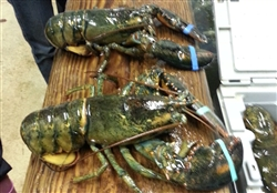 2 x 2 LB Lobsters (Shipping included)
