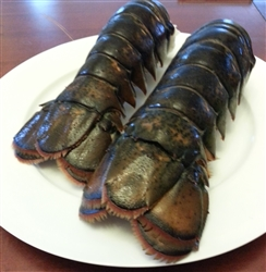 4 x (10 to 12) ounce Cold water lobster tails (Shipping included)
