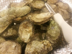 Fresh Oysters (100 Count)