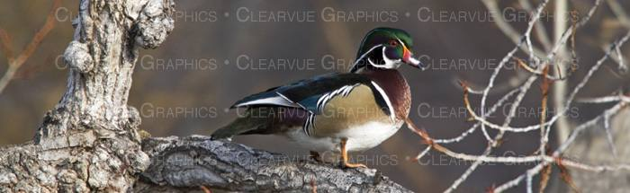 Duck Hunting Rear Window Graphic - Rear window hunting decals for trucksgeese scenery sticker for rear window hunting decals for trucks