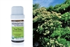 Veriditas By Pranarom  Tea Tree Essential Oil 5ml