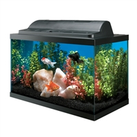 AQUEON 10 GALLON BASIC AQUARIUM KIT