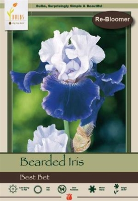 Bearded Iris germanica 'Best Bet'