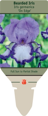 Bearded Iris germanica 'On Edge'