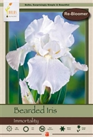 Bearded Iris germanica Immortality