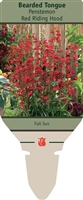 Bearded Tongue Penstemon 'Red Riding Hood'