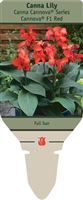Canna Lily generalis 'Cannova® F1 Red'