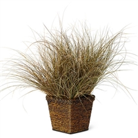 Carex flagellifera Toffee Twist Sedge