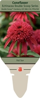 Coneflower Echinacea 'Double Scoop Cranberry'