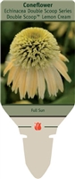 Coneflower Echinacea 'Double Scoop Lemon Cream'