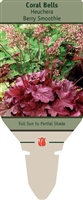 Coral Bells Heuchera 'Berry Smoothie'