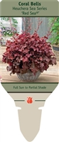 Coral Bells Heuchera 'Red Sea'