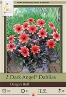 Dahlia Dark Angel 'Dragon Ball'