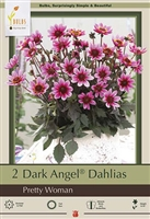 Dahlia Dark Angel 'Pretty Woman'
