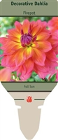 Dahlia Decorative 'Firepot'