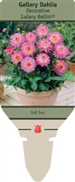 Dahlia Decorative 'Gallery Bellini' PP14,162